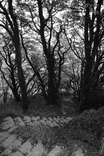 april-danann-Lough-Hyne-Path.jpg