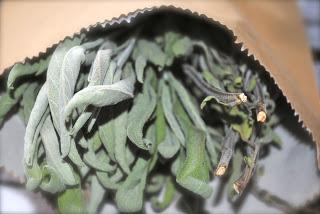 april-danann-Sage-dried .jpg