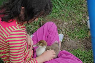 april-danann-Baby-ducks.jpg