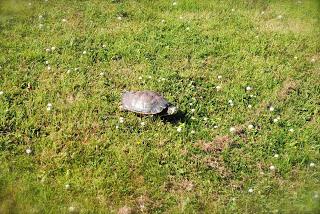 april-danann-Turtle.jpg