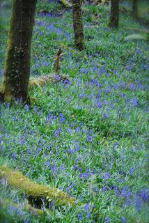 april-danann-Spring-Colours-bluebells.jpg