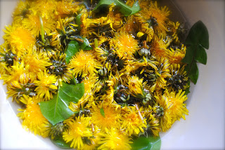 april-danann-dandelions.jpg