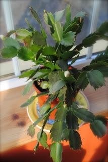 april-danann-Cactus.jpg