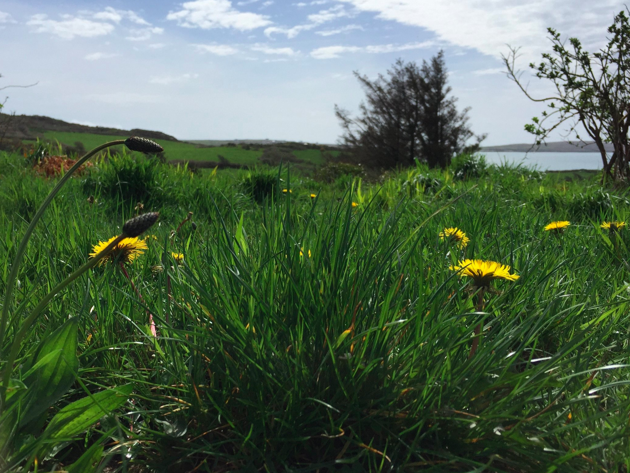 april-danann-dandelions.jpg