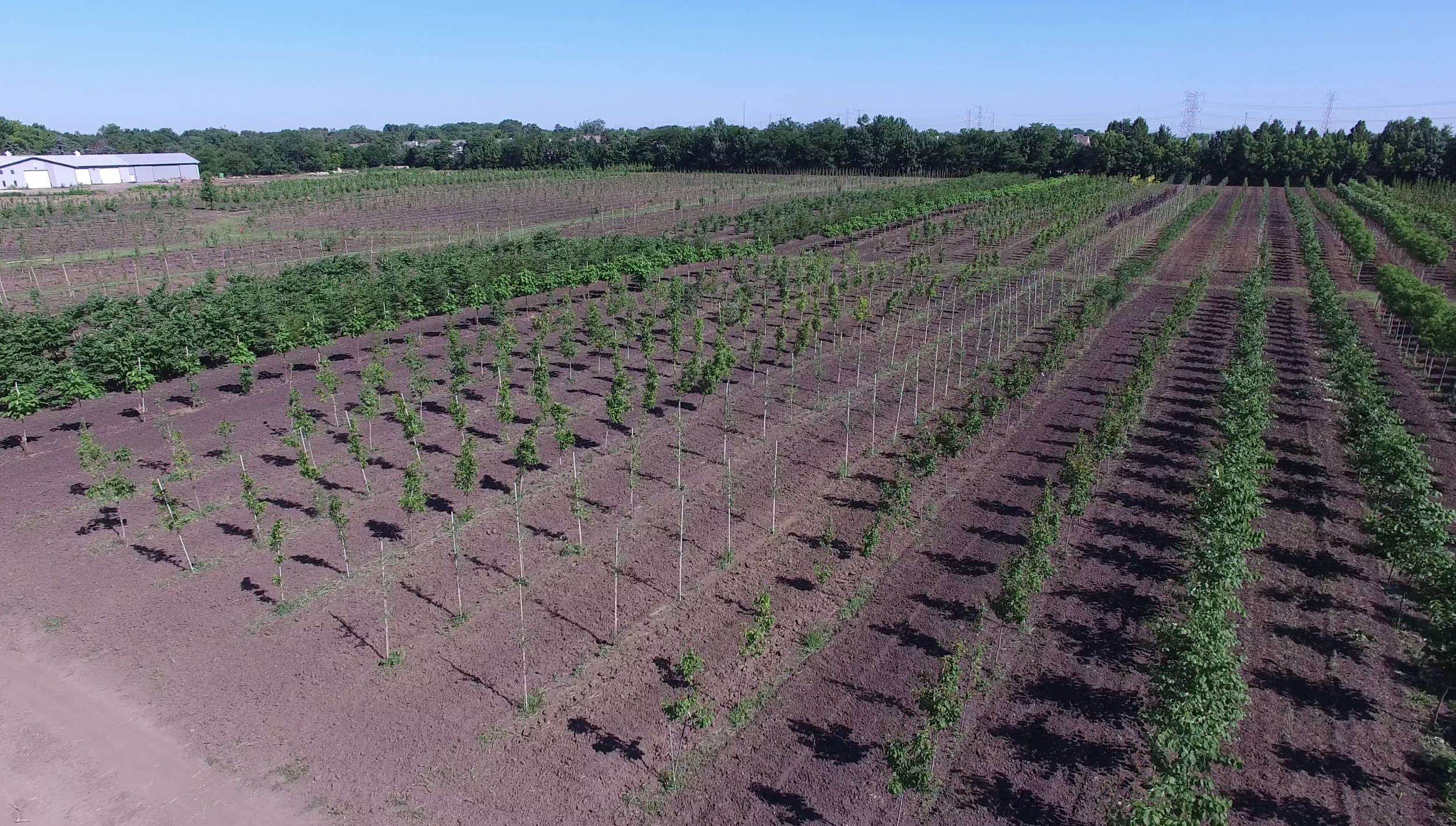 A birds-eye view of our extensive stock of hardy, wholesale trees.