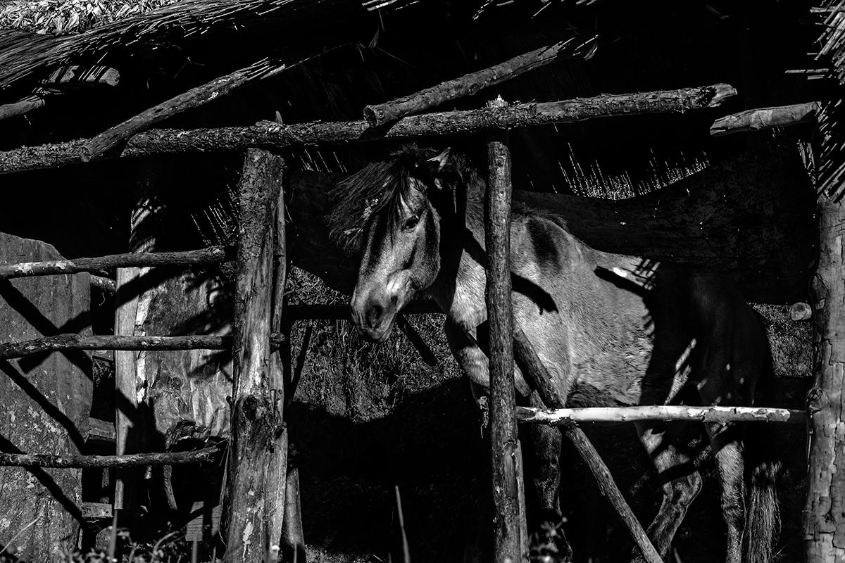 Photographer:   Manabendra Bhattacharjee   Country: India  Title:  Dark Horse
