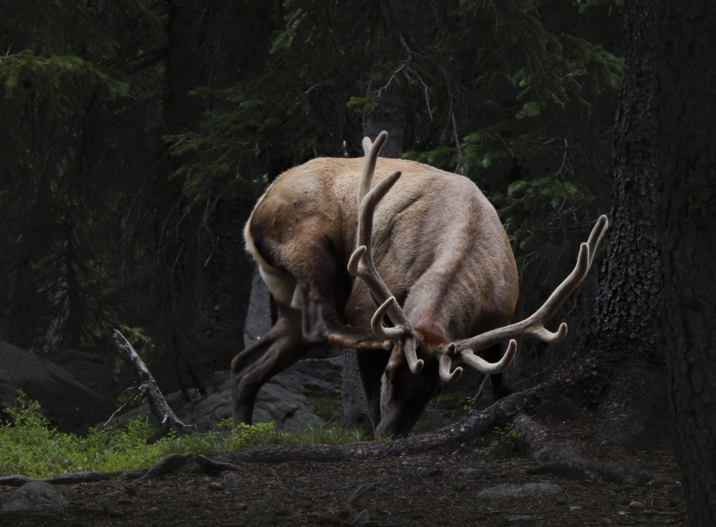 Photographer:  Emily Carroll   Country:  Canada  Title:  Stag
