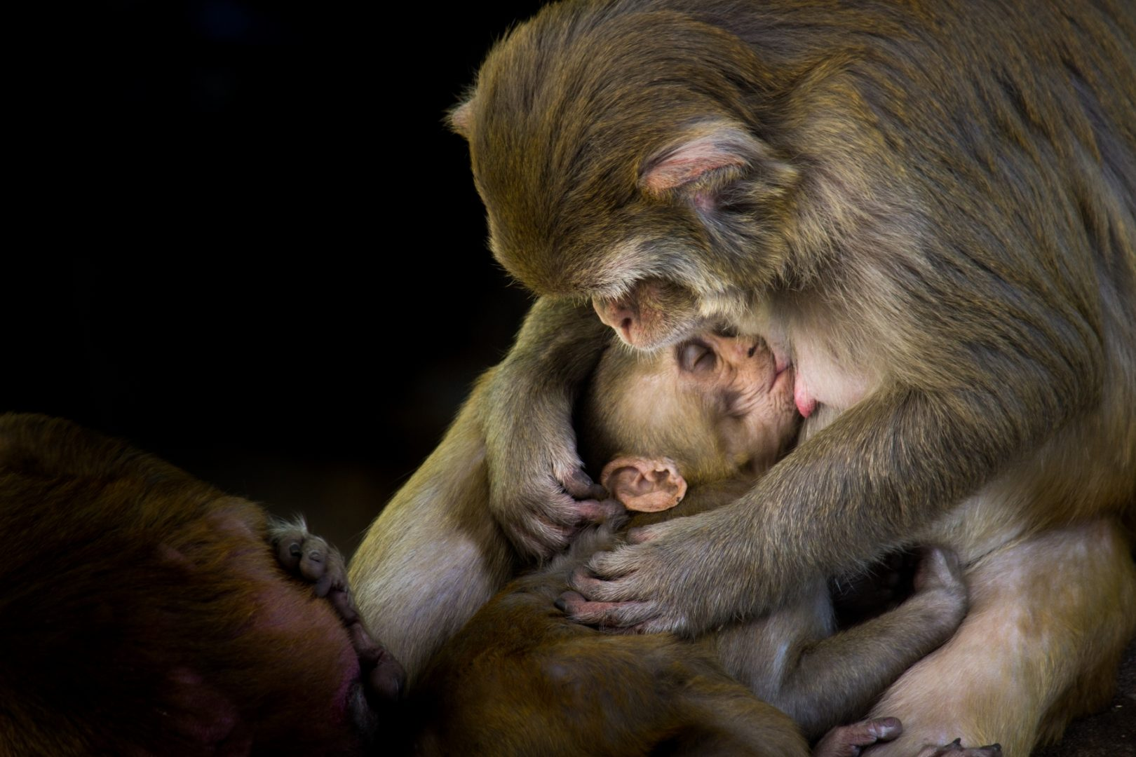 Photographer: Robbie Ross   Country: India  Title: Emotions of Mother and Child