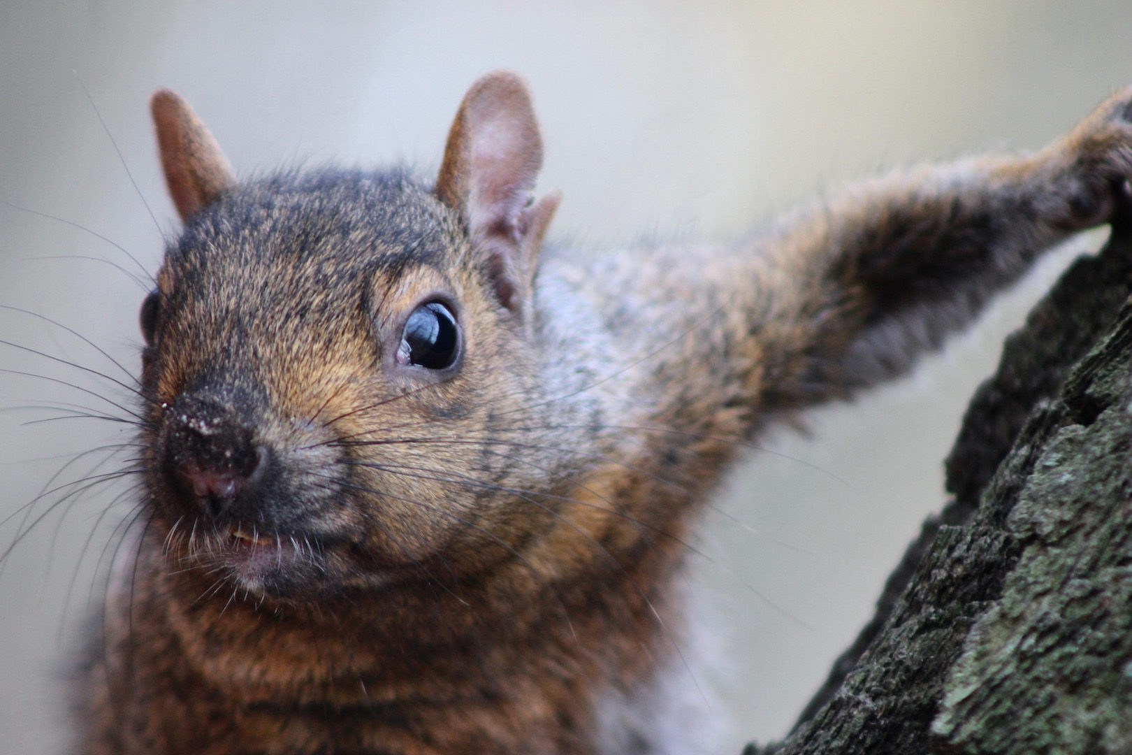 Photographer: Rupert Mackie   Country: Canada  Title: The Squirrel's Gaze