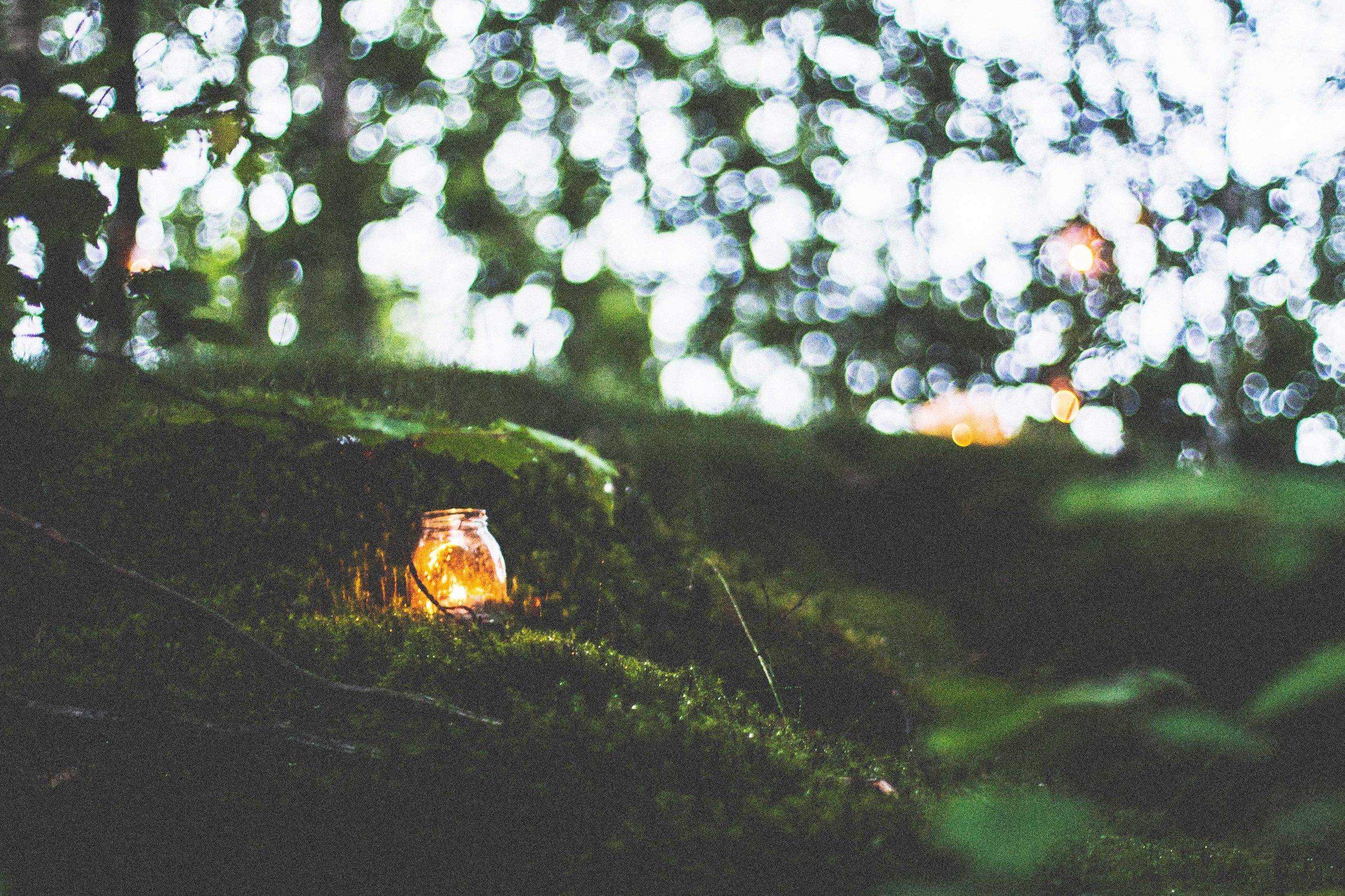 holistic-woodland.jpg