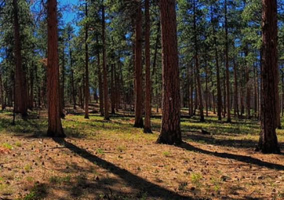 Forests in the Greater La Pine Basin managed to reduce wildland fires & ensure high quality water in the upper Deschutes Basin.