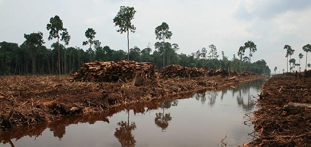 Image Credit: Rainforest Action Network