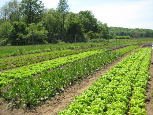 COURTESY OF POUGHKEEPSIE FARM PROJECT