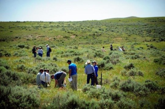 Participants in a workshop hosted by the University of Wyoming's Wyoming Reclamation and Restoration Center examine vegetation near Gillette, Wyo. A UW College of Business researcher has helped quantify the economic value of biodiversity in grasslands for the purpose of carbon storage.   Credit: University of Wyoming