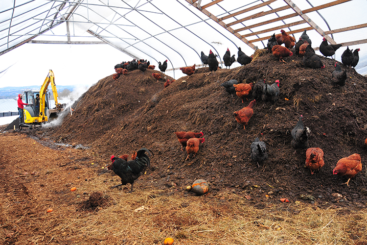 Vermont Compost Company , in Montpelier, Vermont produces some of the highest-quality compost on the planet. Thousands of chickens pick through and turn the compost. The company sells both eggs and compost.