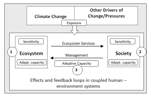 Effects and feedback loops in coupled human–environment systems.  Source : Adapted from Locatelli B, Kanninen M, Brockhaus M, Colfer CJP, Murdiyarso D and Santoso H. 2008 . Facing an uncertain future: how forests and people can adapt to climate change . Bogor: Center for International Forestry Research. Available  here