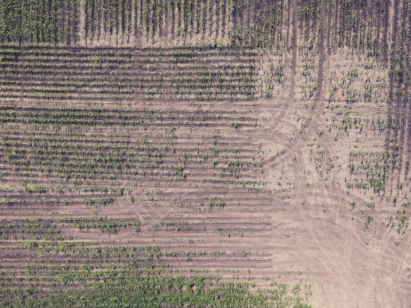 Soil health experts say that leaving the ground bare between rows of crops, increases topsoil erosion and runoff of fertilizers and other chemicals into water supplies. | Photo by  Jordan Nelson on  Unsplash