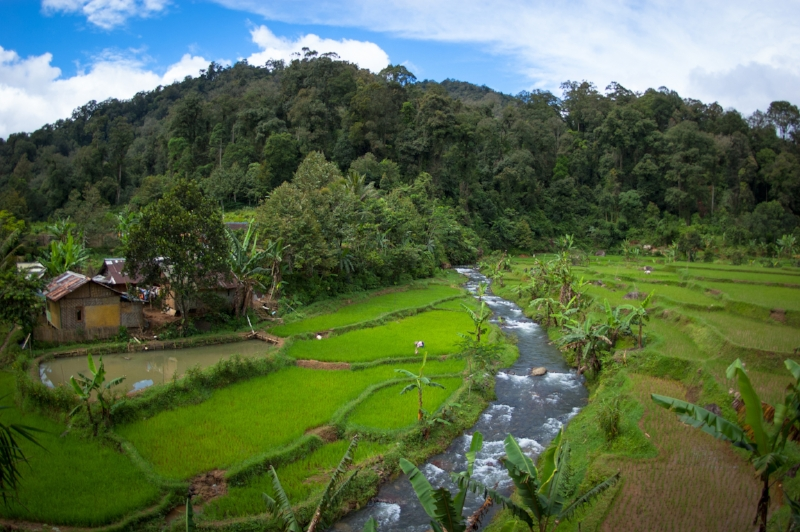 In West Java's Mount Halimun Salak National Park, agroforestry can play a key role in food security for local communities while helping maintain the landslide-prone landscape.  CIFOR Photo/Aulia Erlangga