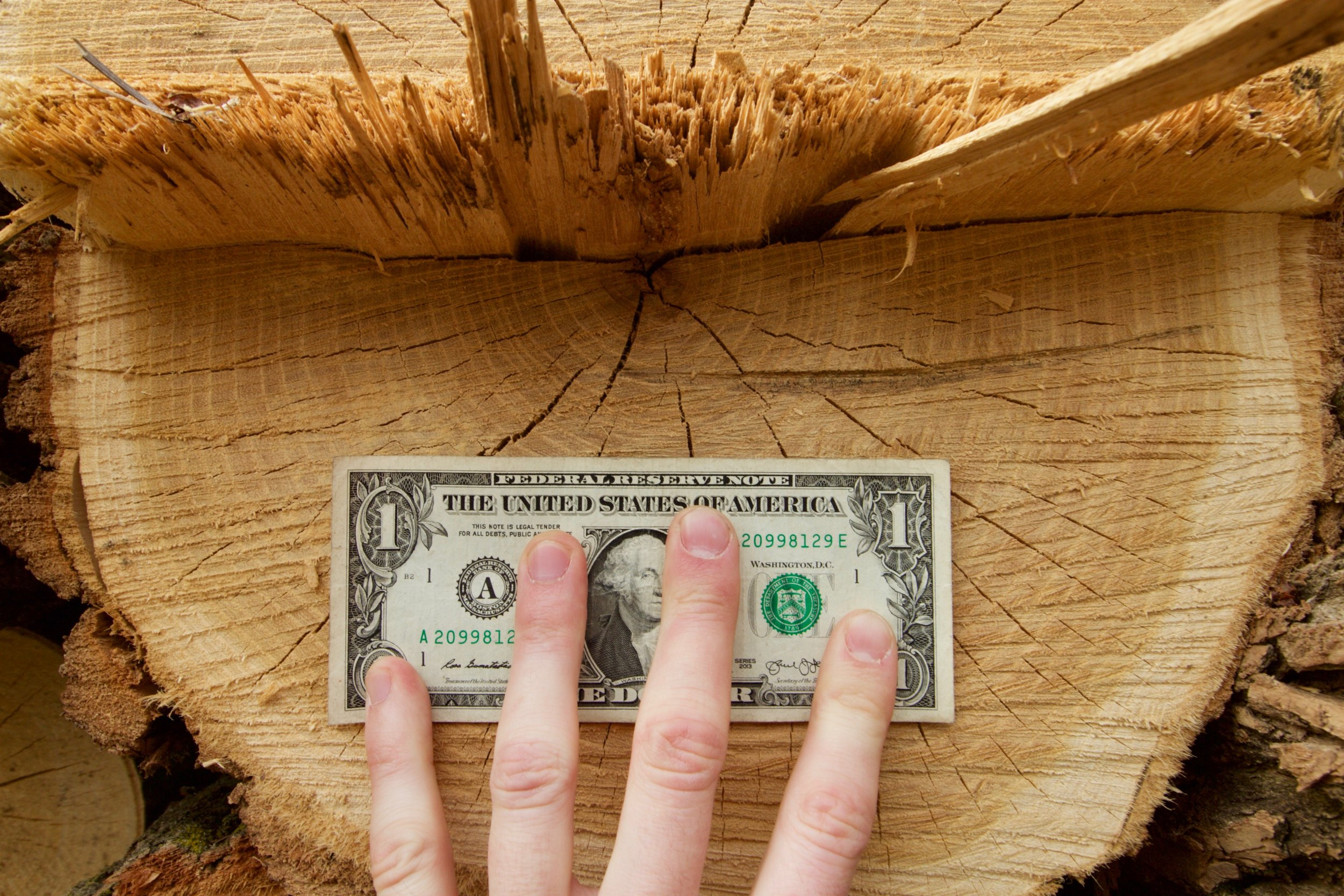 If we plant 100 black locust trees today, and mill them into lumber in 2035, what is that net income worth to us in today's dollars? These are the questions we must ask to de-risk agroforestry.