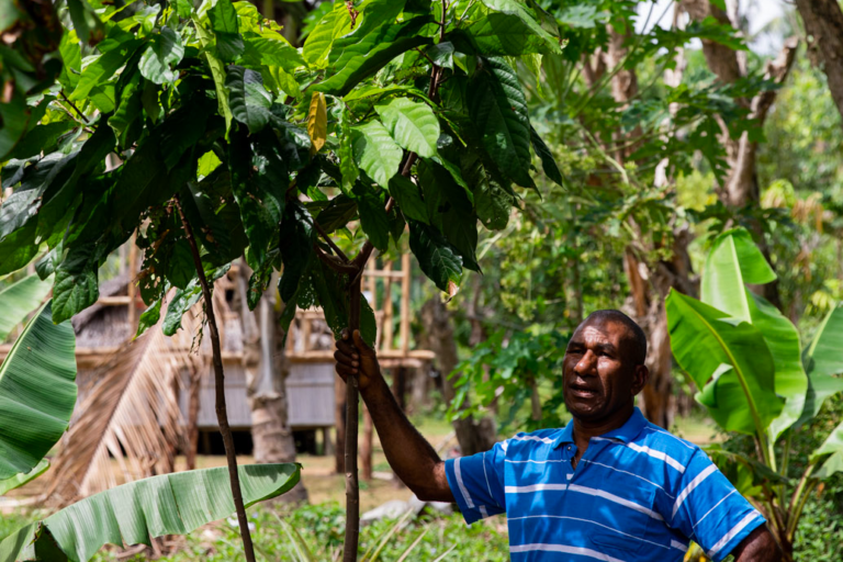 Jim Kelly in the community of Bampu, Papua New Guinea, stands next to a young cacao tree within an agroforestry garden. Image by Camilo Mejia Giraldo for Mongabay.