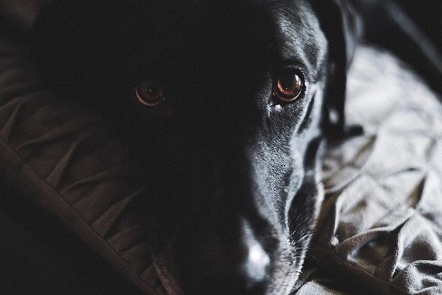 What do you see 👀 ———————————————————————— How's everyone doing? Hope you all have a great week. Planning on releasing a short video sometime this week (probably Friday)🤙🤙 • • • • • • #lab #labs #blacklabs #blacklabpuppy #dogsbeingbasic #puppers #puppersofinstagram #visualsofnature #awesome_photographer #wildbayarea #510photography #watchthisinstagram #dogsbeingdogs #dogsbeingcute #dogmodelsearch #dogmodels