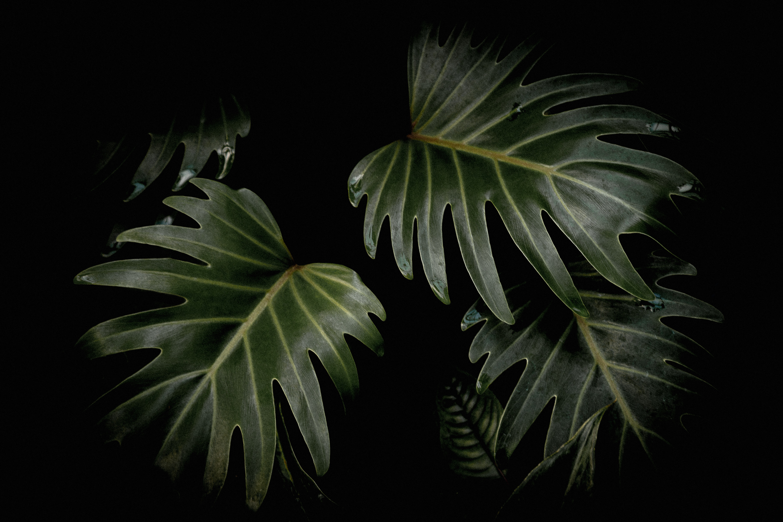 07-monstera-leaves-moody-kew-garden-anna-elina-lahti-photography.jpg