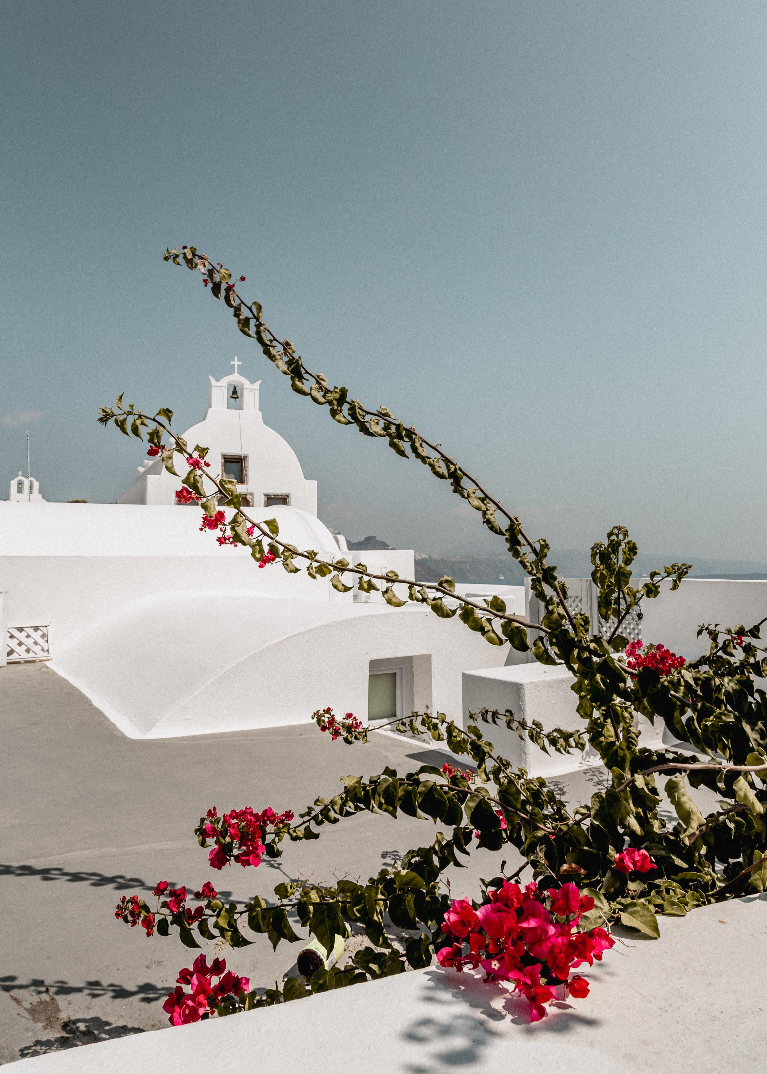 09-santorini-ia-oia-greece-travel-bougainvillea-anna-elina-lahti-photographer.jpg