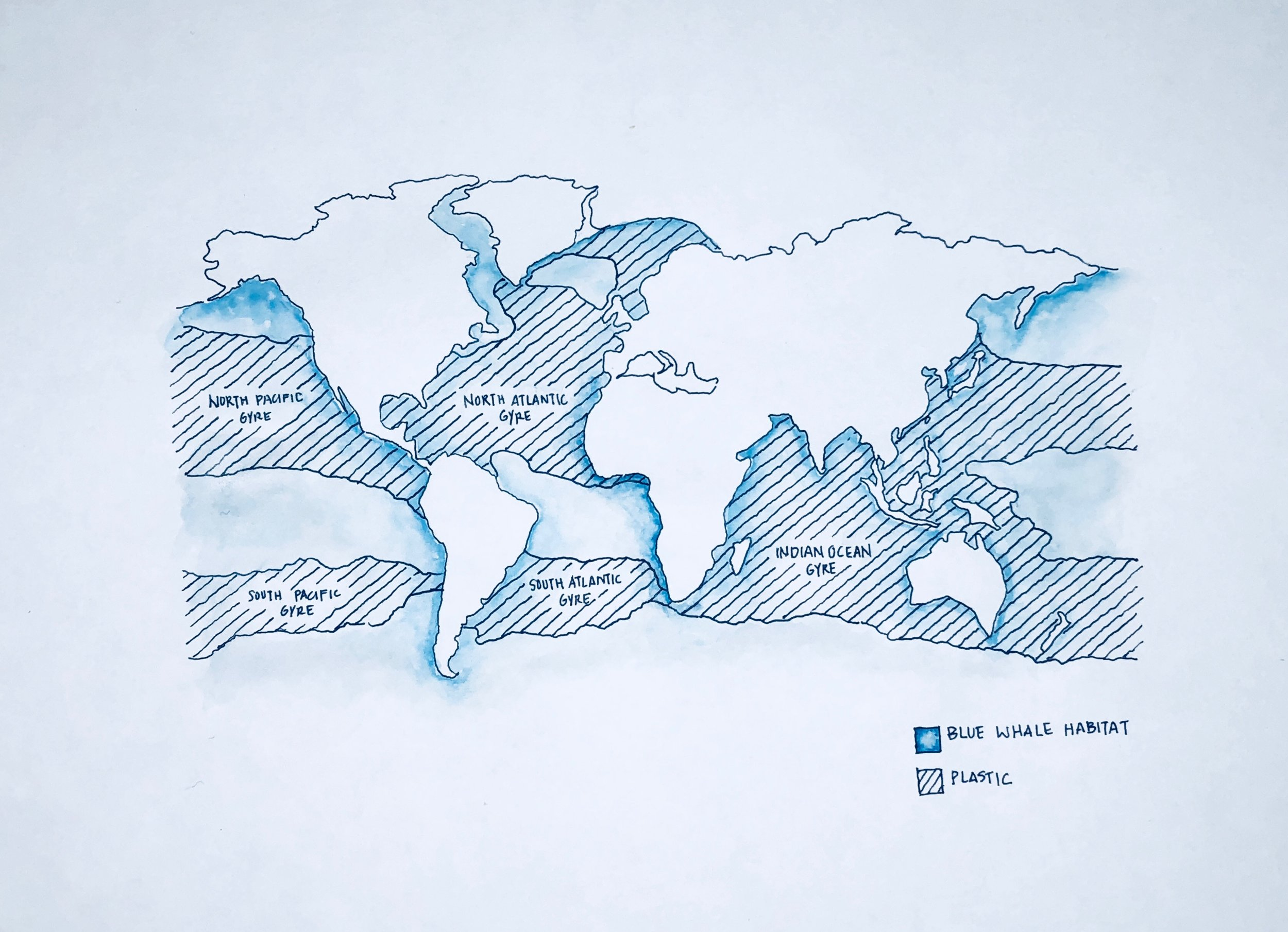 Whale. Blue whale habitat overlaid with location of macroplastics. Blue whales pretty much live everywhere, so does plastic. Data from National Geographic and  Eriksen et al 2014 .