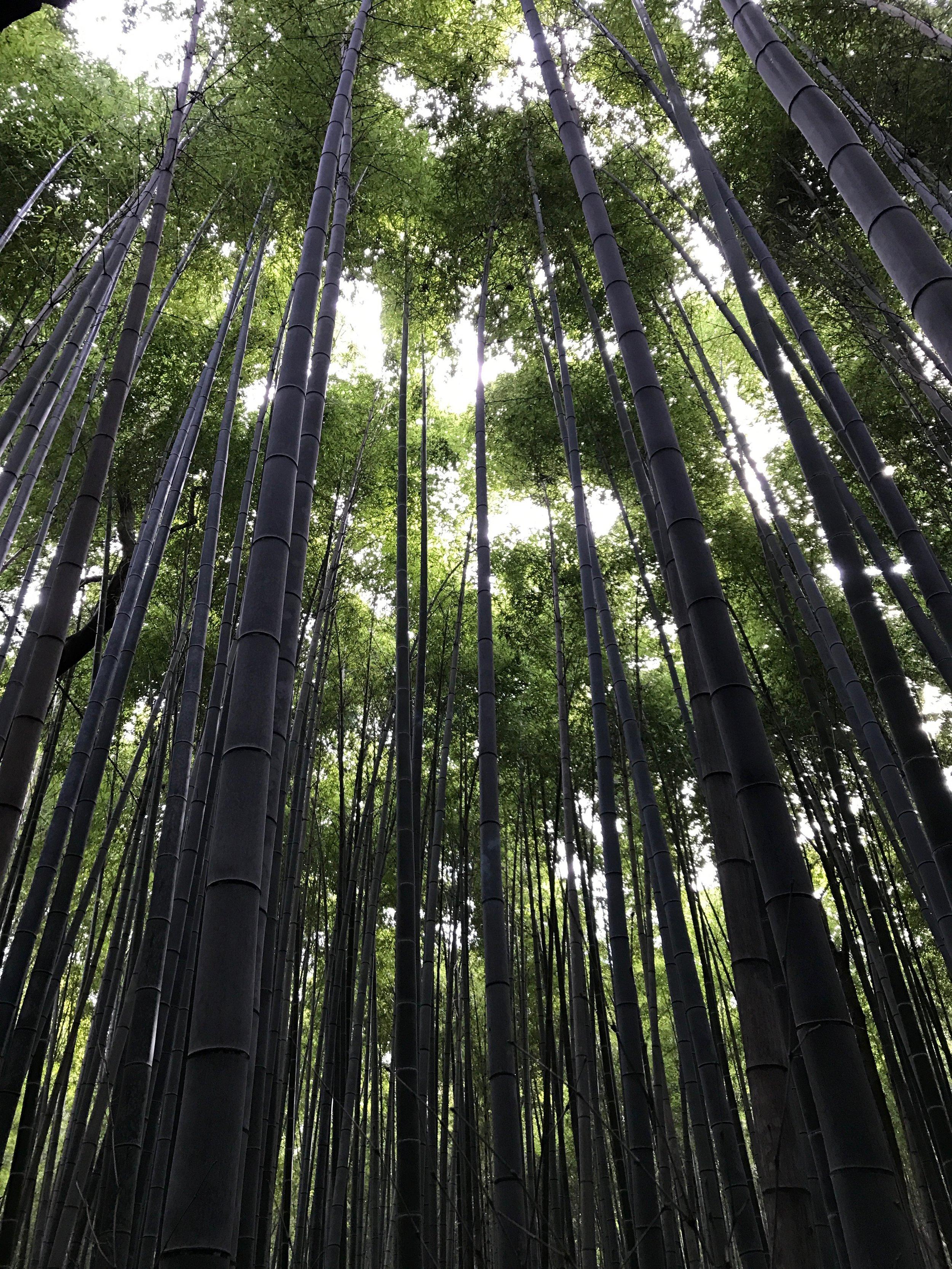 Bamboo Forest, Arashiyama District, Kyoto