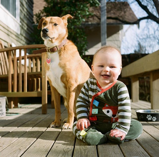 Mumford and son. It's hard to believe my happy little goofball turns 1 this month. 🥳 . . . . #rolleiflex #rollei #staybrokeshootfilm #bluemooncamera #heyfsc #ffsfeatureme #c41 #filmphotography #ishootfilm #istillshootfilm #sheshootsfilm #120mm #baby #dogsofinstagram