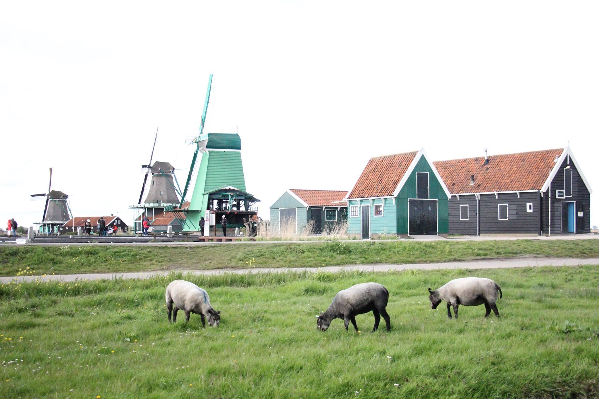 Zaanse Schans - a Windmill Village