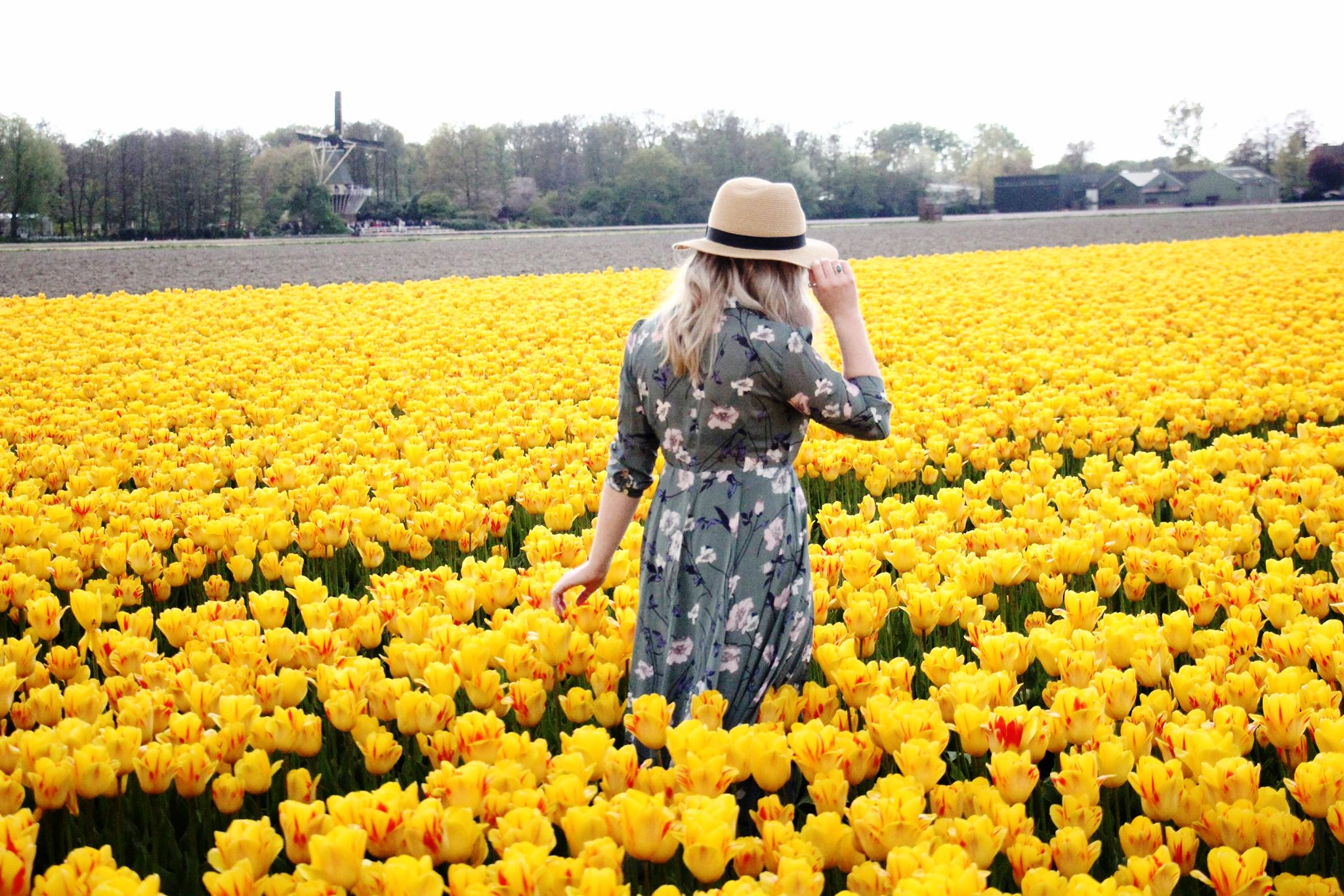 Keukenhof tulip fields.jpg