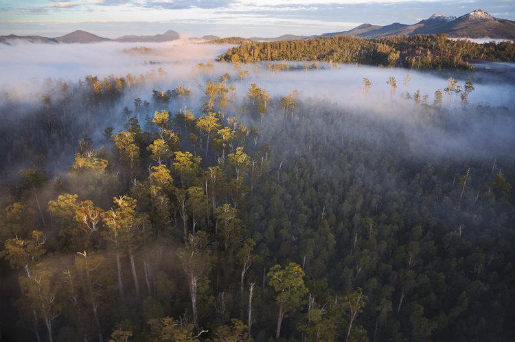 Styx-Valley-forests-Tasmania.jpg