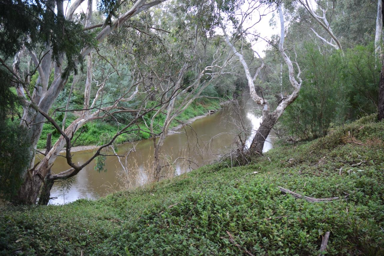 Riverland- Yarra Flats.jpg