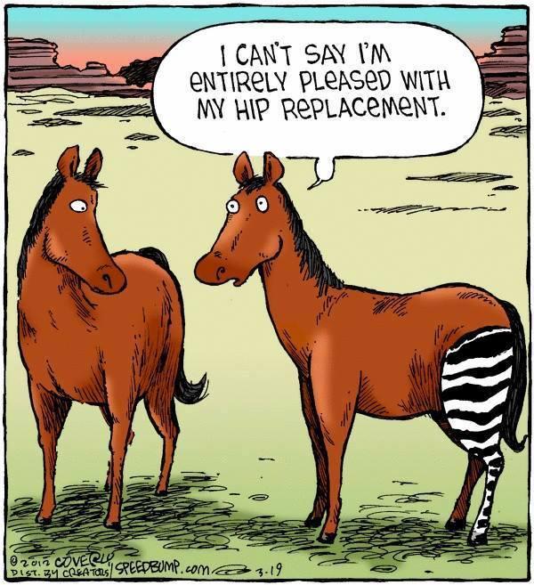 Hip Replacement Joke.