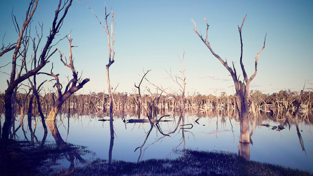 Lara wetlands, an oasis in every sense.