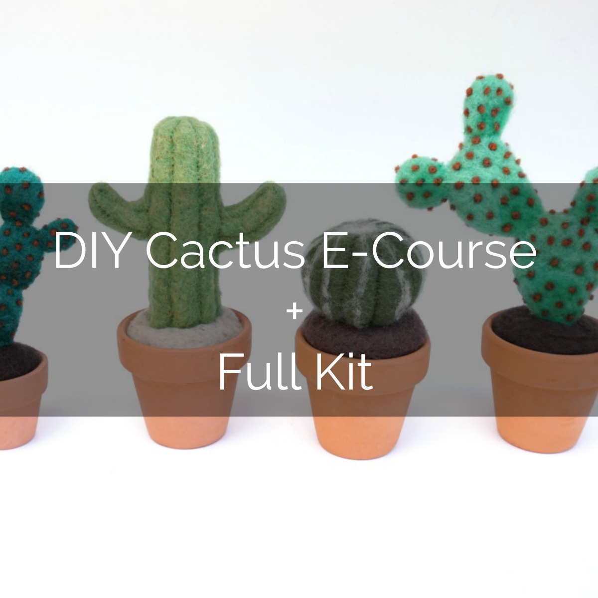 cactus and full kit.jpg