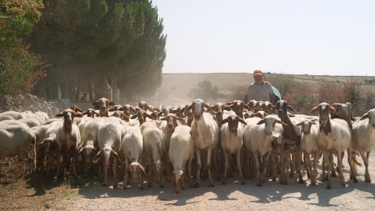 Shepherds in the Cave_FC_shepherds_05.jpg