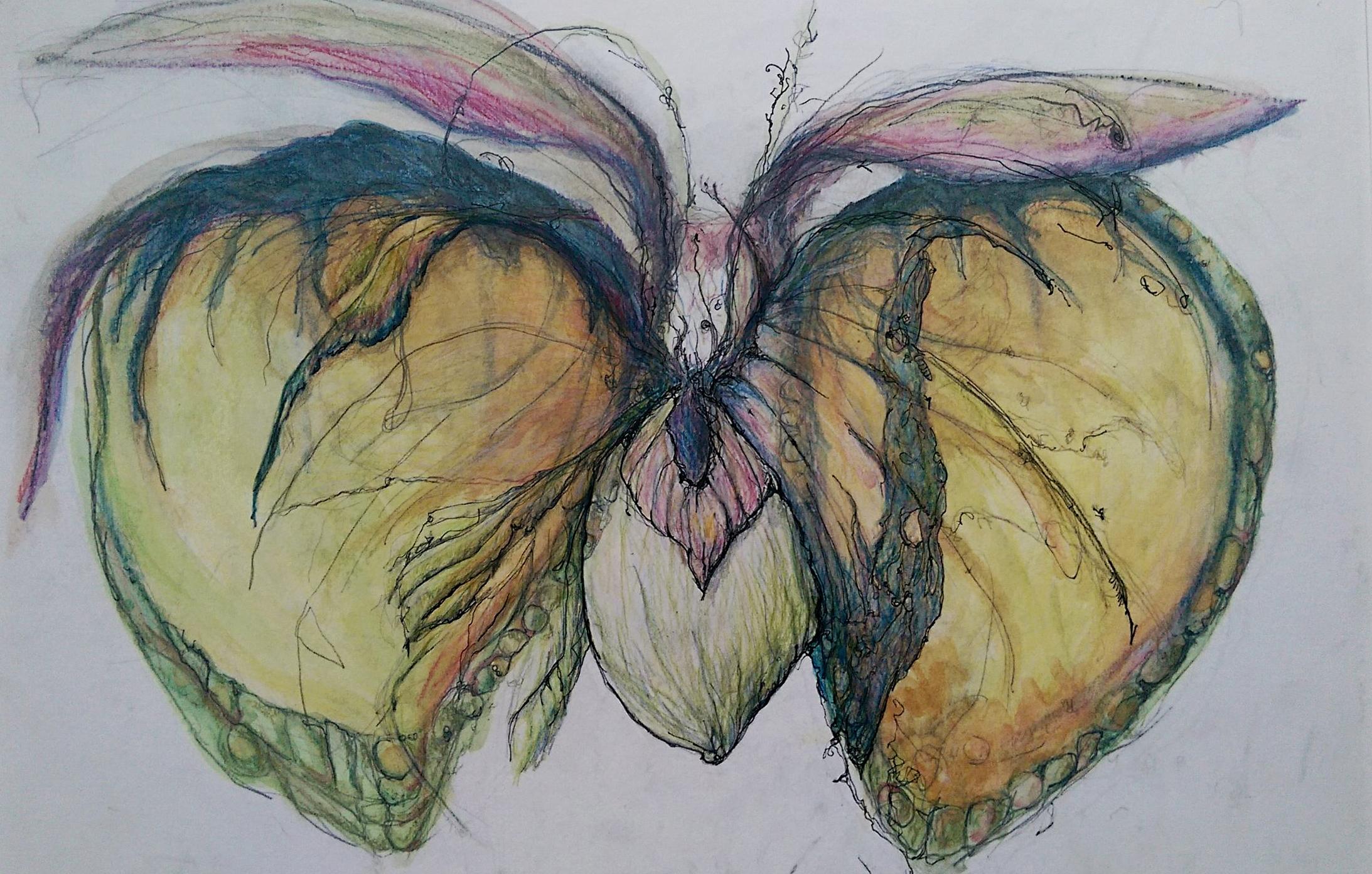 framed butterfly summer.jpg