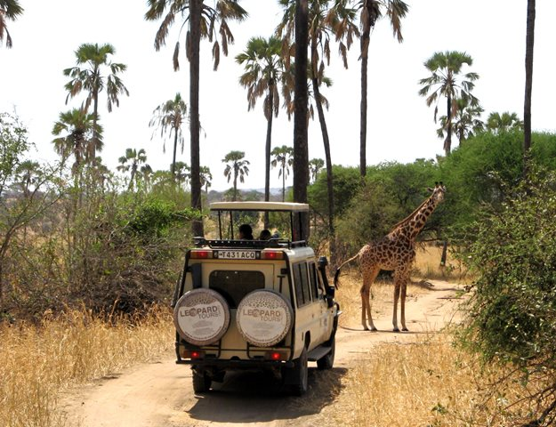 """""""One of many close encounters with wild animals on a fantastic safari holiday! This giraffe posed for fifteen minutes while blocking the road!"""" - Doug & Treena Brown."""