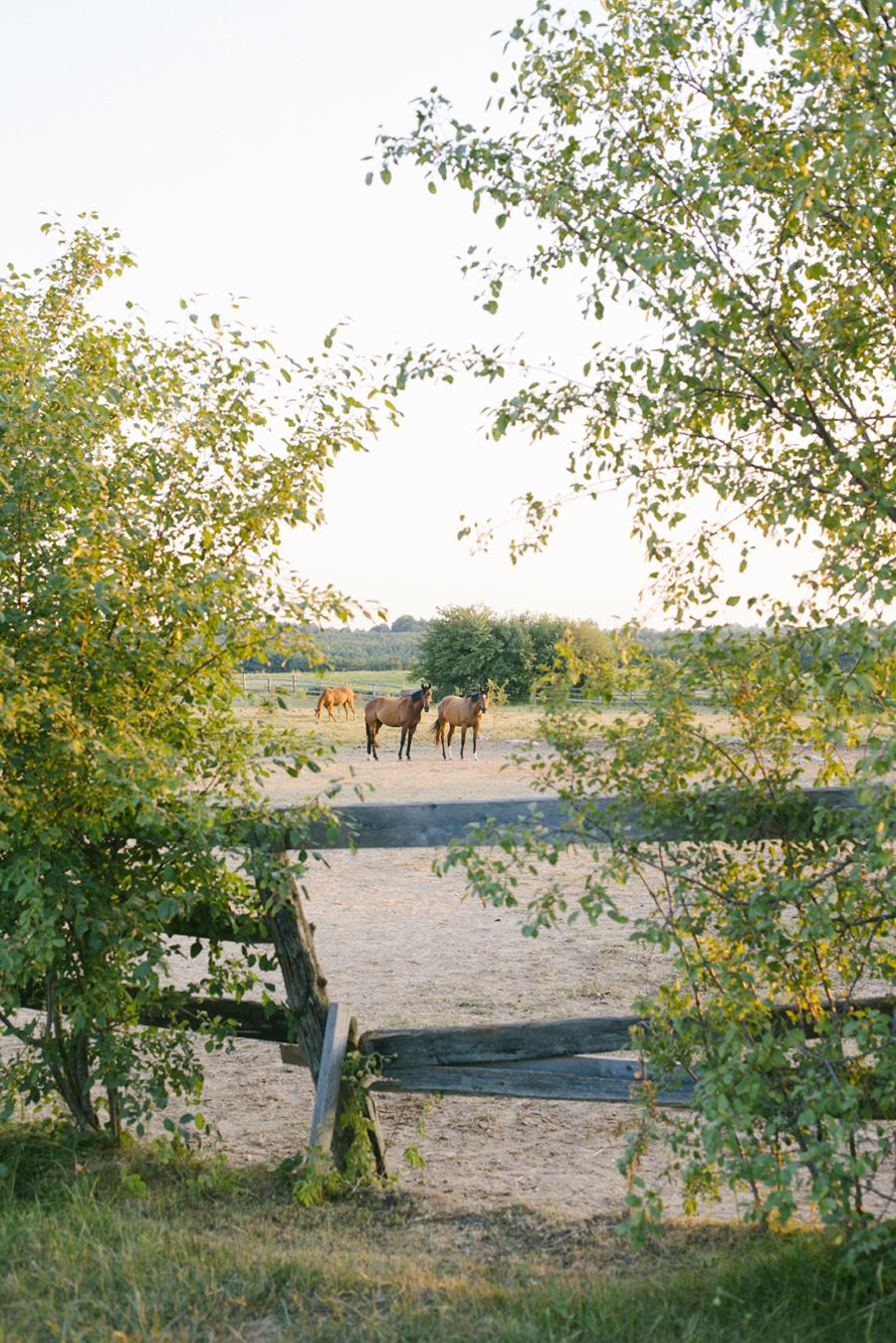 Horse-Ranch-Engagement_11.jpg