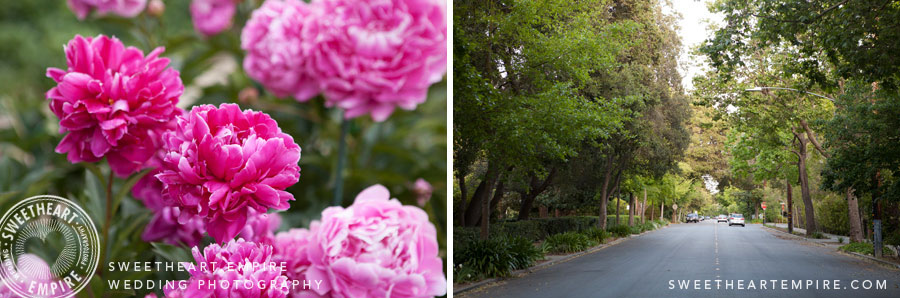 Palo Alto Gardens and Trees