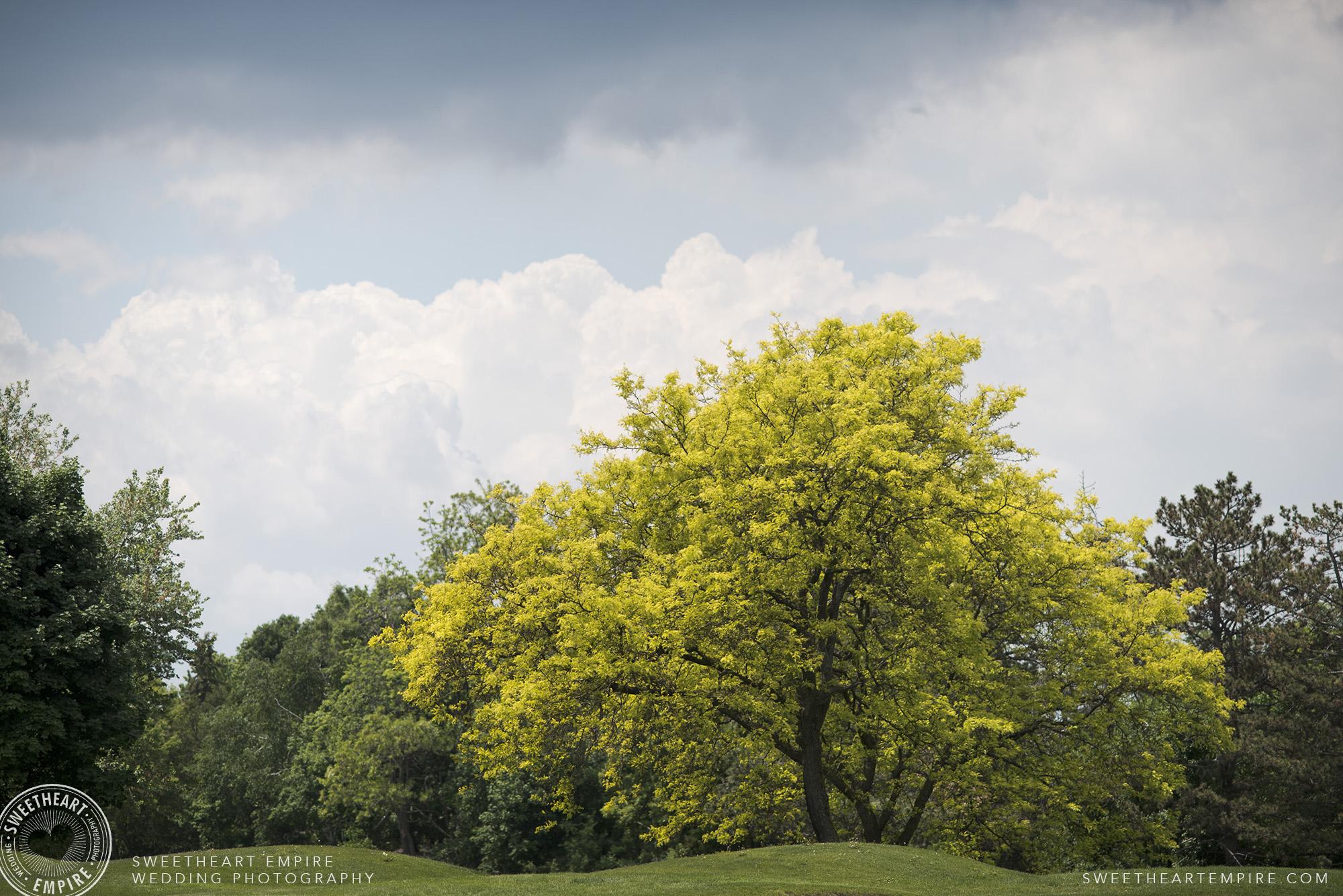 Beautiful trees at Oakville Golf Club Wedding