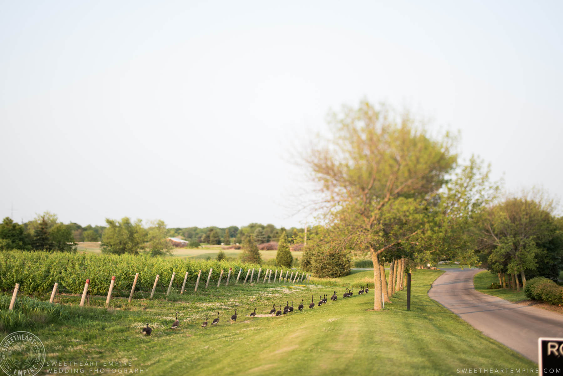 Beautiful vineyards, Rockway Vineyard Wedding, Niagara