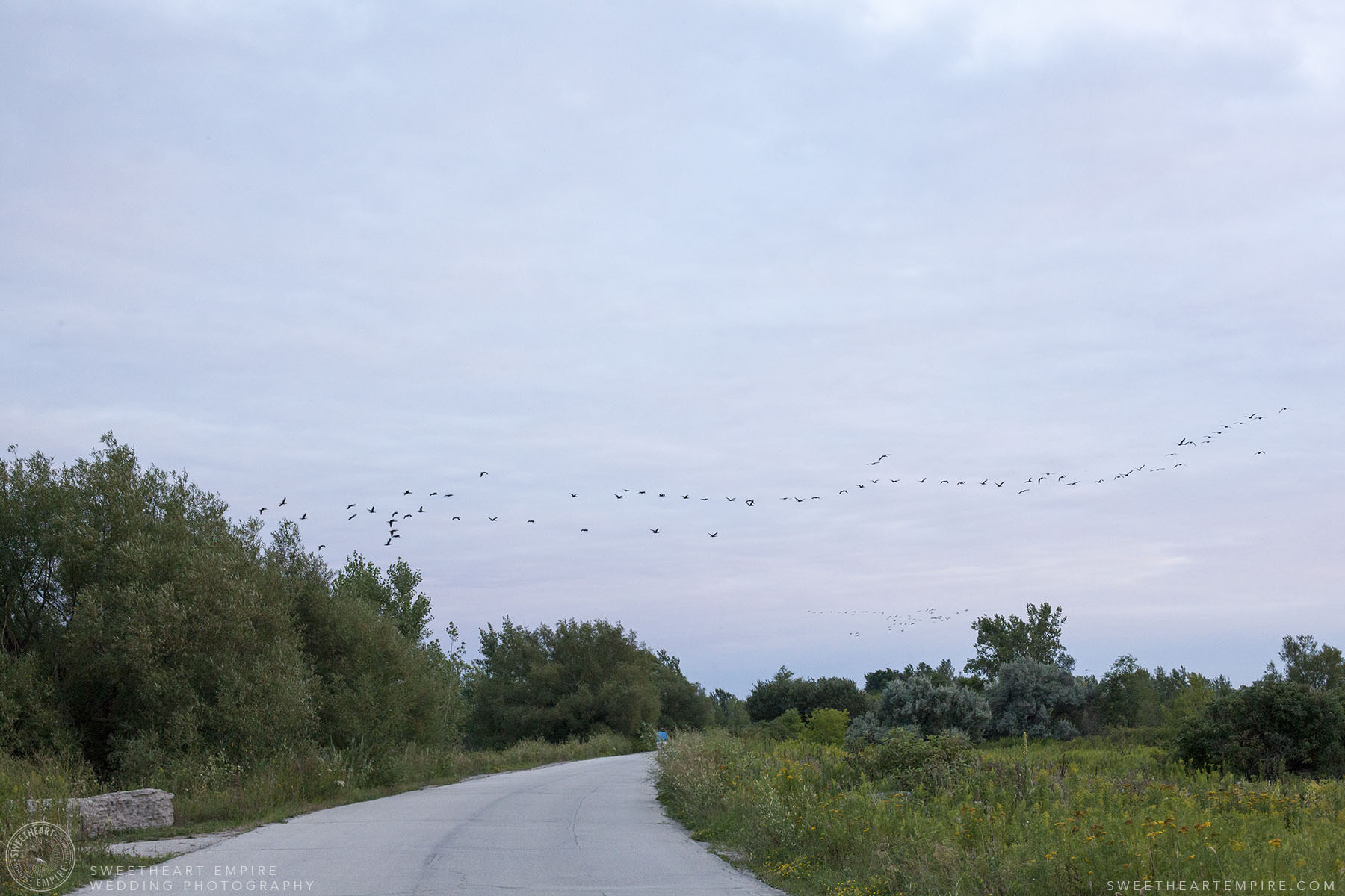 14_Canada Geese from Tommy Thompson Park.jpg