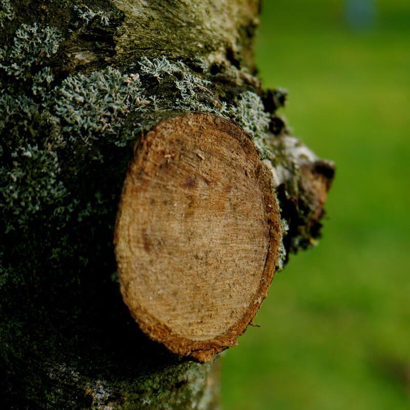 Tree Pruning Service in Nelson, Richmond & Tasman