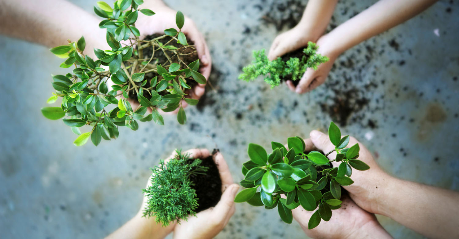 gardening classes, gardening workshops, learn to plant, learn to make, Raleigh NC