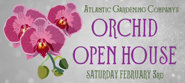 orchid open house.png
