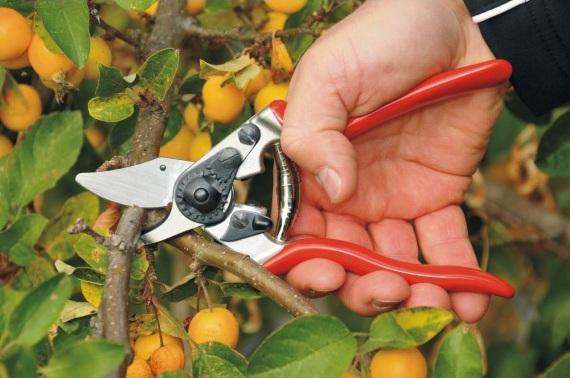 Felco - Hand-held pruners