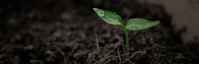 soil+and+seedling+pixabay.jpg